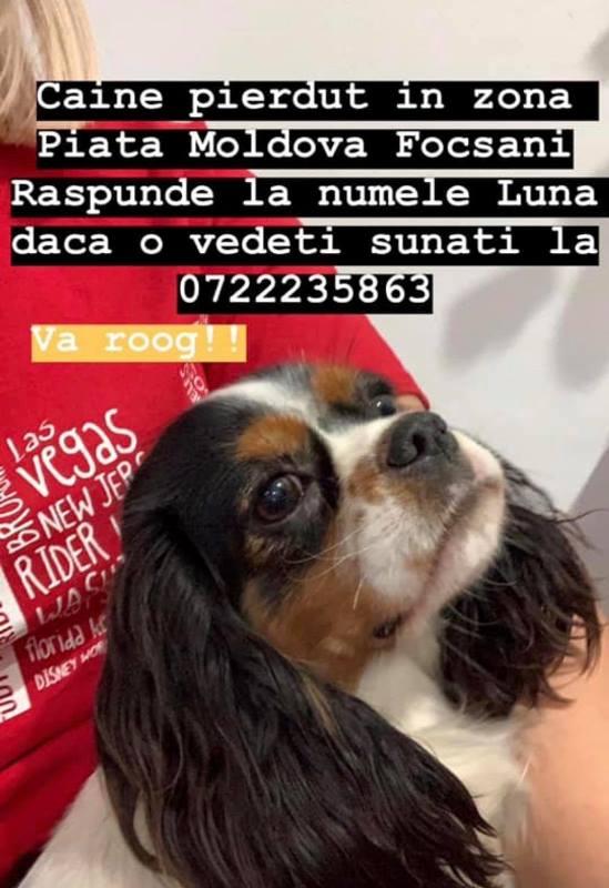 Cătelușă pierdută în zona pieței din Focșani