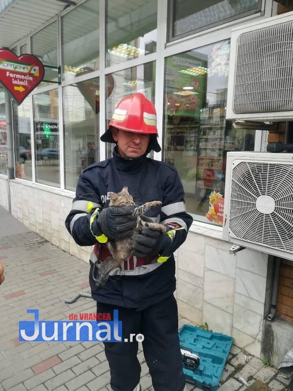FOTO: Salvată de miorlăit! Pisicuță captivă între fațada unui magazin și peretele fals, salvtaă de pompieri