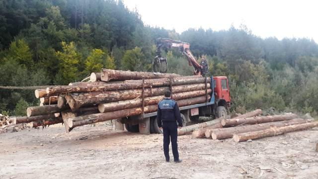 Peste 110 controale la hoții de lemne. Polițiștii au confiscat material lemnos și au împărțit amenzi