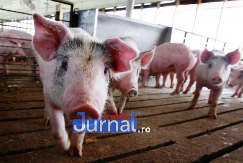 Pesta porcină confirmată într-o gospodărie din Răcoasa