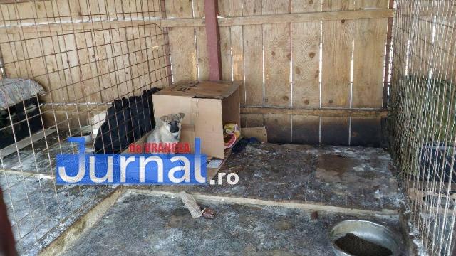 Direcția de Dezvoltare Focșani anunță un nou târg de adopții pentru câinii comunitari!