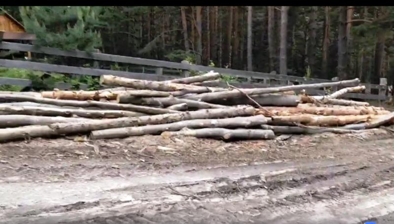 VIDEO: Cum se taie pădurea din Vrancea, în vreme de pandemie