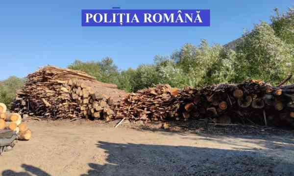 Peste 31 m.c de lemn, confiscați de polițiști de pe Valea Bârgăului! S-au dat amenzi de 10.000 lei
