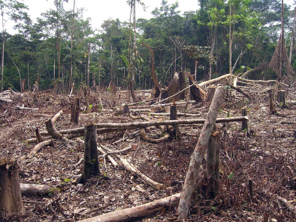 Motivarea CCR pentru respingerea DNA-ului pădurilor
