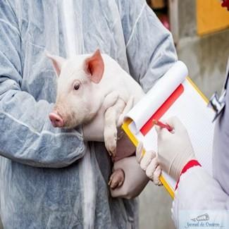 Sunt 541 de focare de pestă porcină în România. Fermierii pre