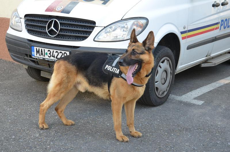 Concurenţă acerbă pentru cele trei posturi de agent la Poliţi
