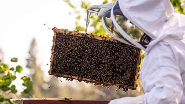 Peste 7.000 de apicultori au primit sprijin financiar prin APIA